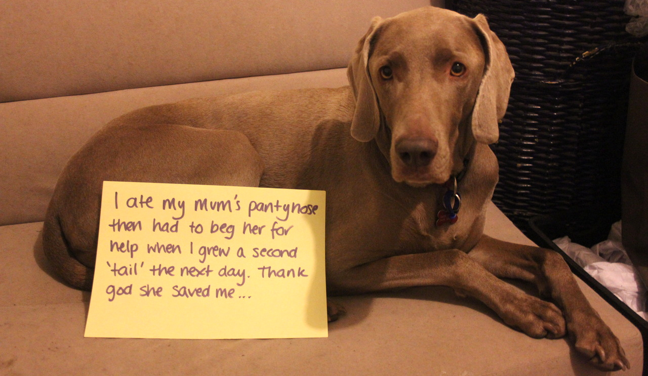 20 funny pictures of public dog shaming - Dogtime