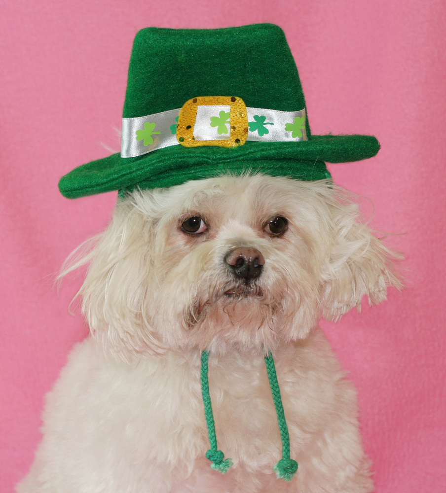 25 cute dog pictures for st patrick u0027s day dogtime