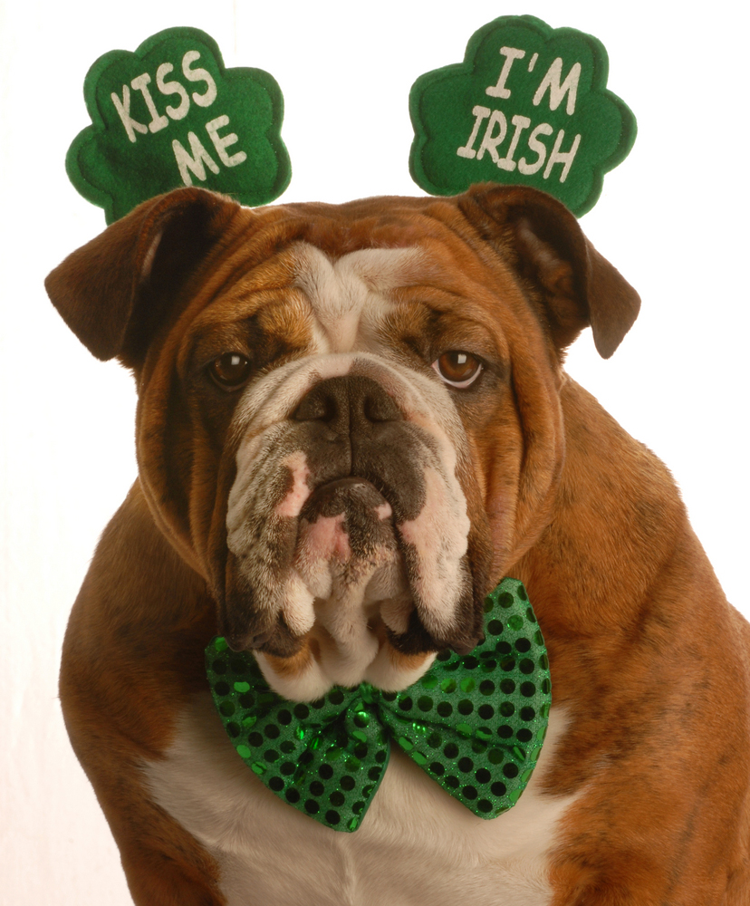 Image result for st patricks day animals