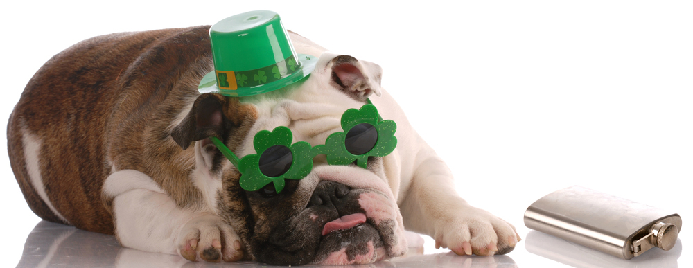 25 Cute Dog Pictures For St. Patrick's Day - Dogtime