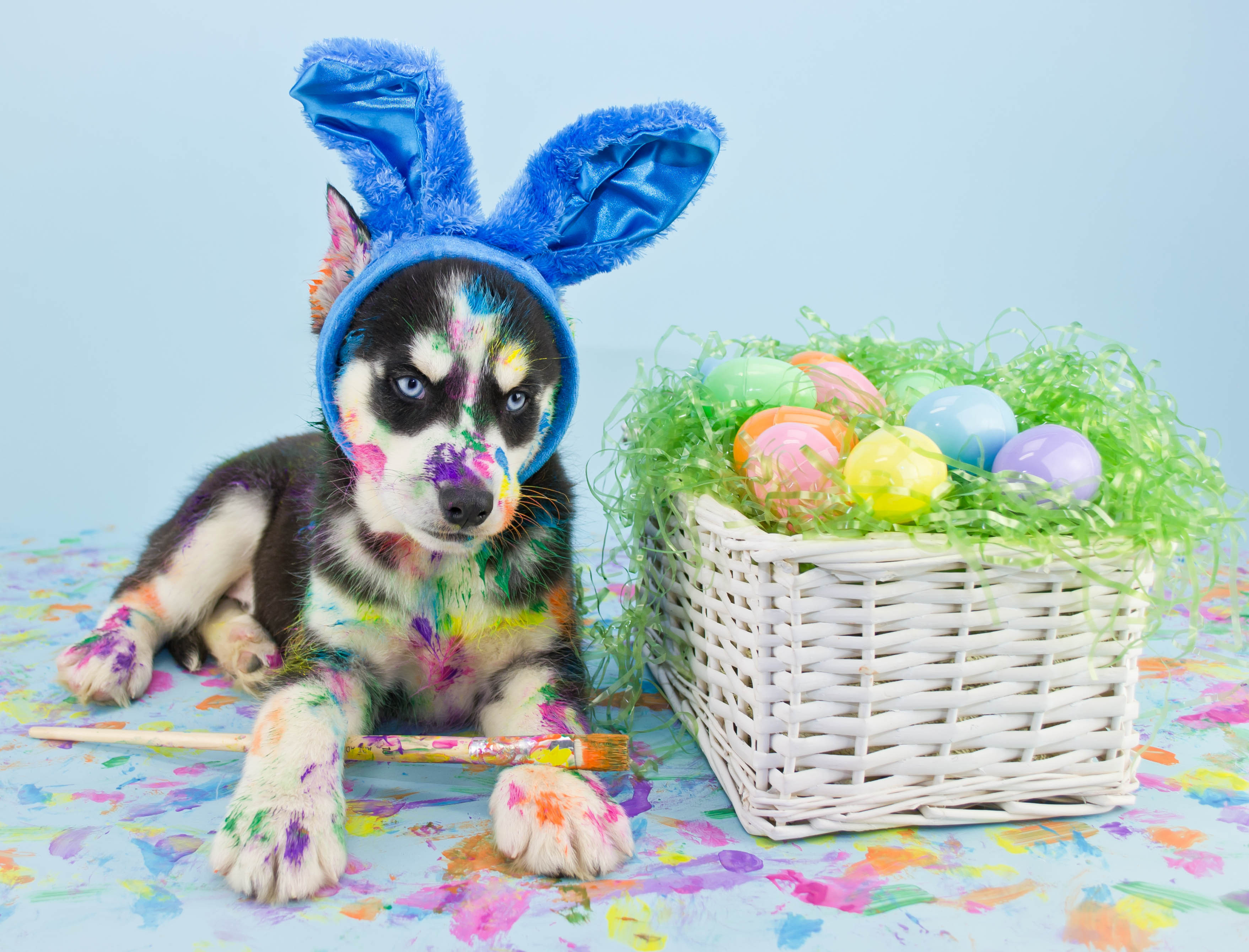 25 Dogs Who Are Posing For Their Easter Greeting Cards - Dogtime