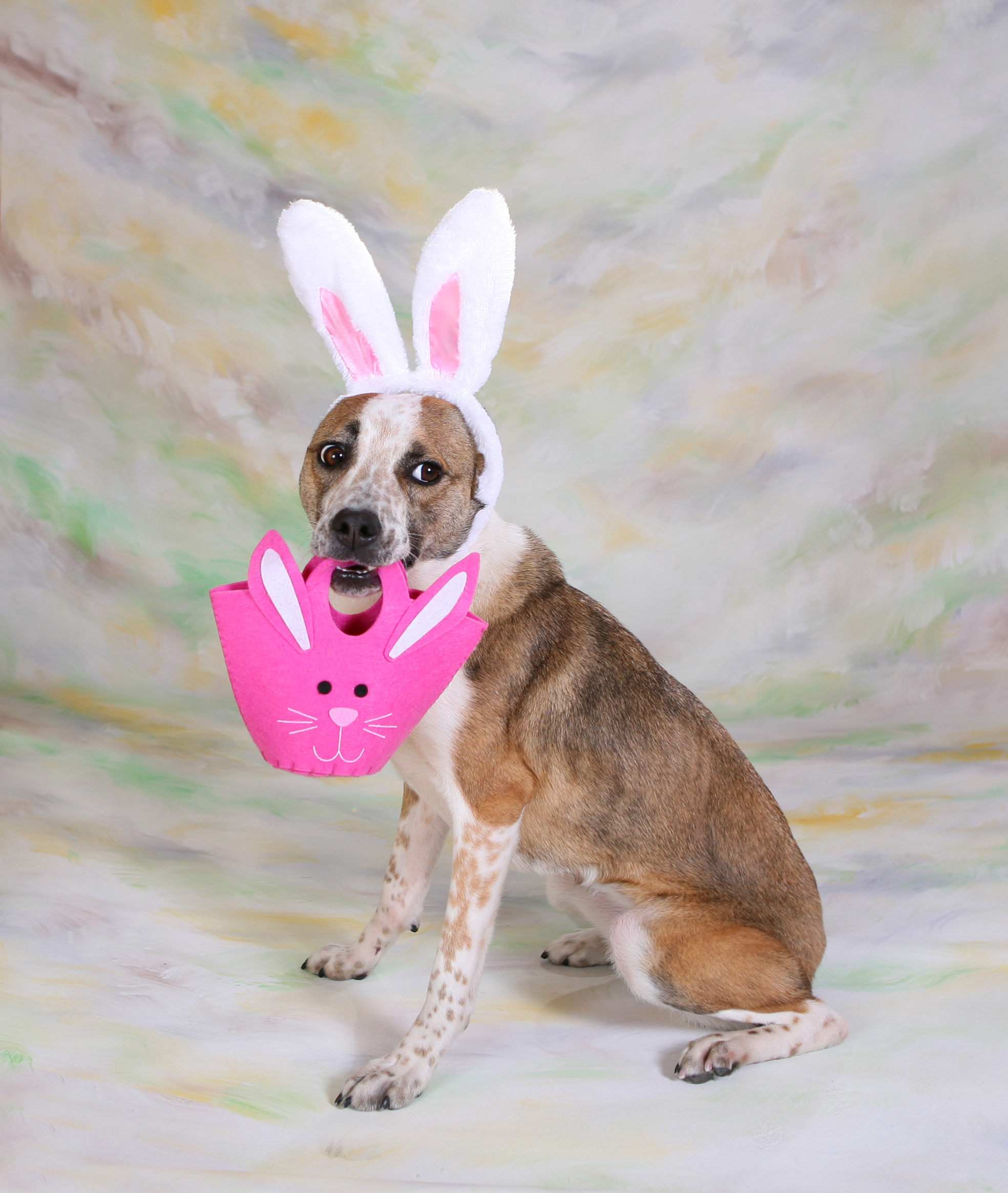 25 Dogs Who Are Posing For Their Easter Greeting Cards ...