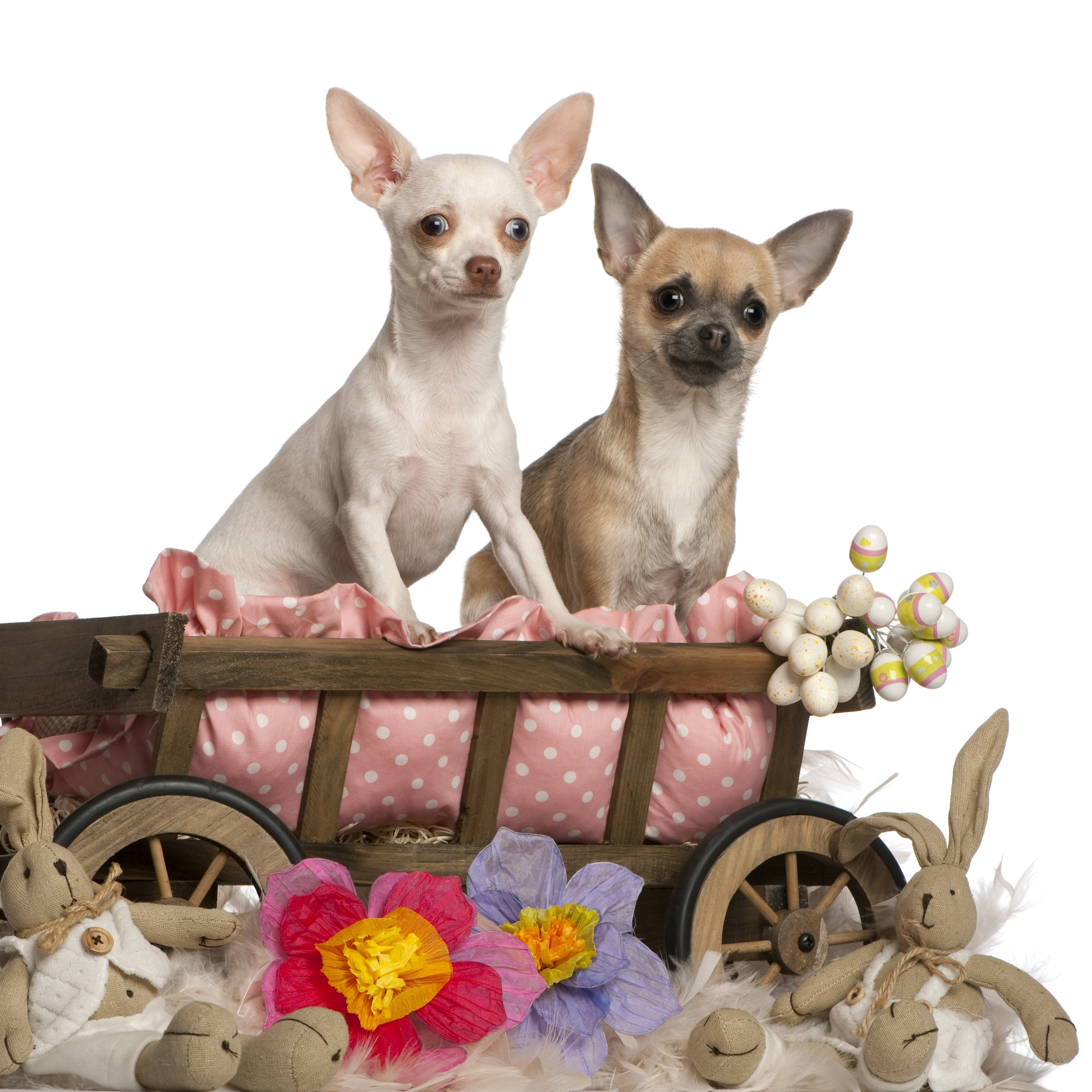 ... Easter dogs? Here are a few more dogs who are ready for Easter