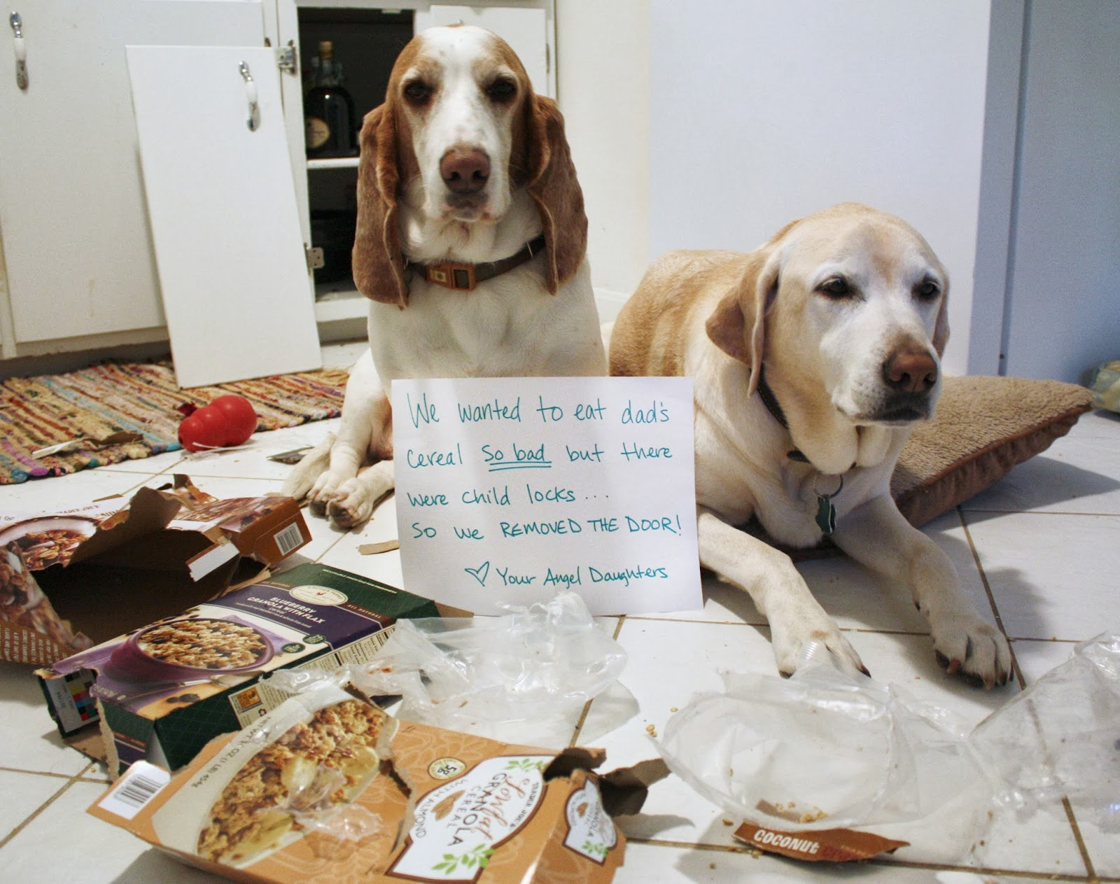 25 Pictures Of Public Dog Shaming Dogtime