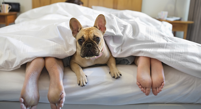 More than one in three families in the United States owns a dog.