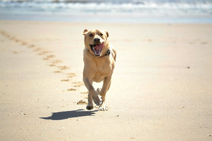 The average dog can run about 19 miles per hour at full speed.