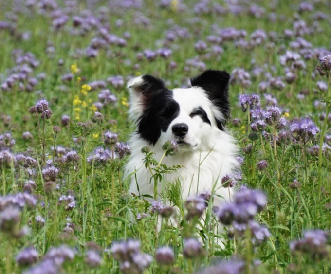 30 Dazzling Border Collie Names - Dogtime