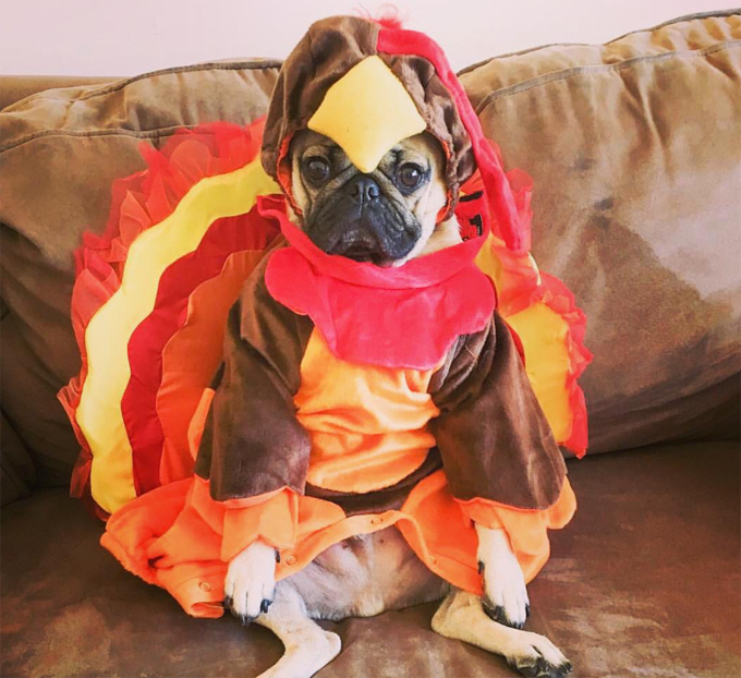 30 Dogs Ready To Celebrate Thanksgiving With You! & 30 Dogs Ready To Celebrate Thanksgiving With You! - Dogtime