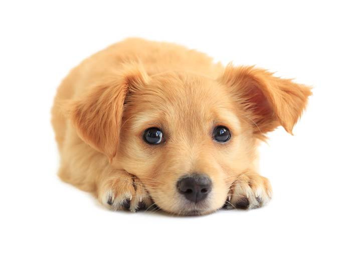 Puppies - Adorable PUPPY PICS & What to Expect