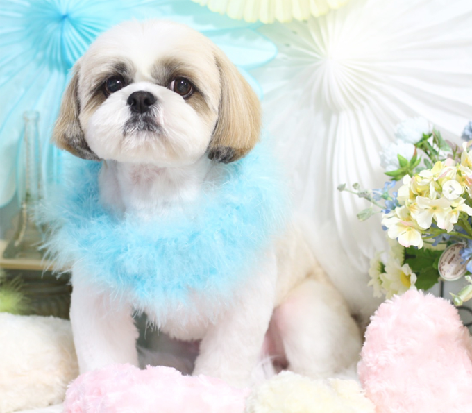 30 Great Names For Shih Tzu Dogs [PICTURES] - Dogtime