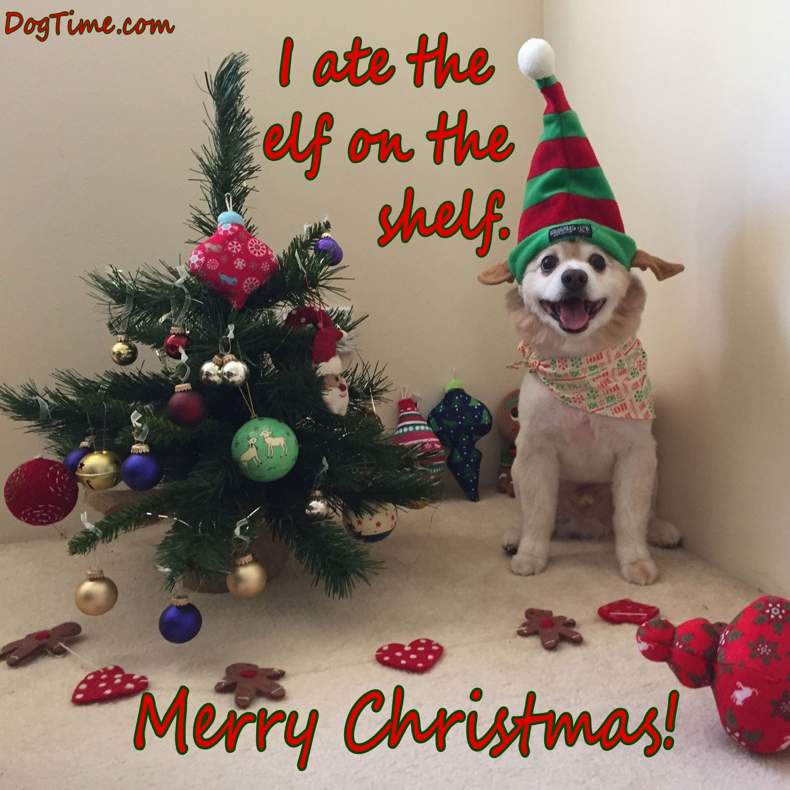 30 dog christmas cards you can share with your friends and family 30 dog christmas cards you can share with your friends and family kristyandbryce Choice Image