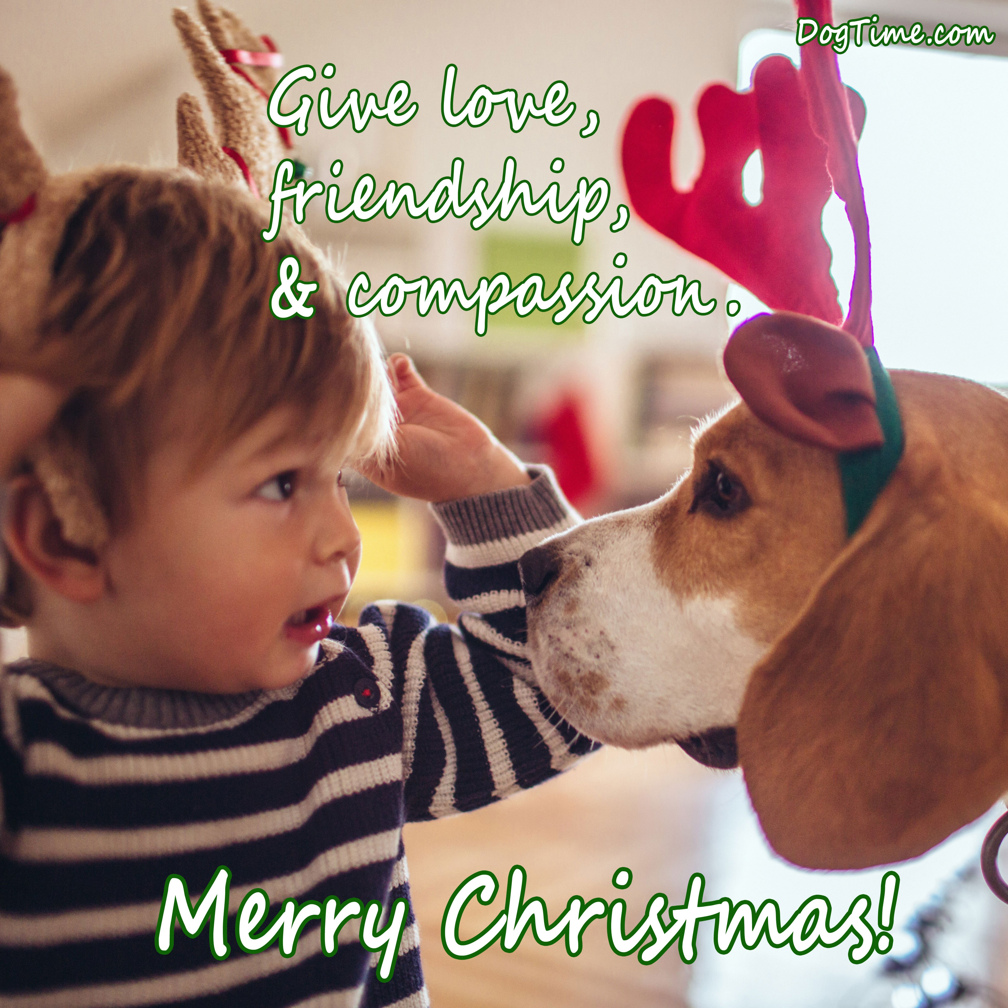 30 Dog Christmas Cards To Share With Your Friends And Family - Dogtime