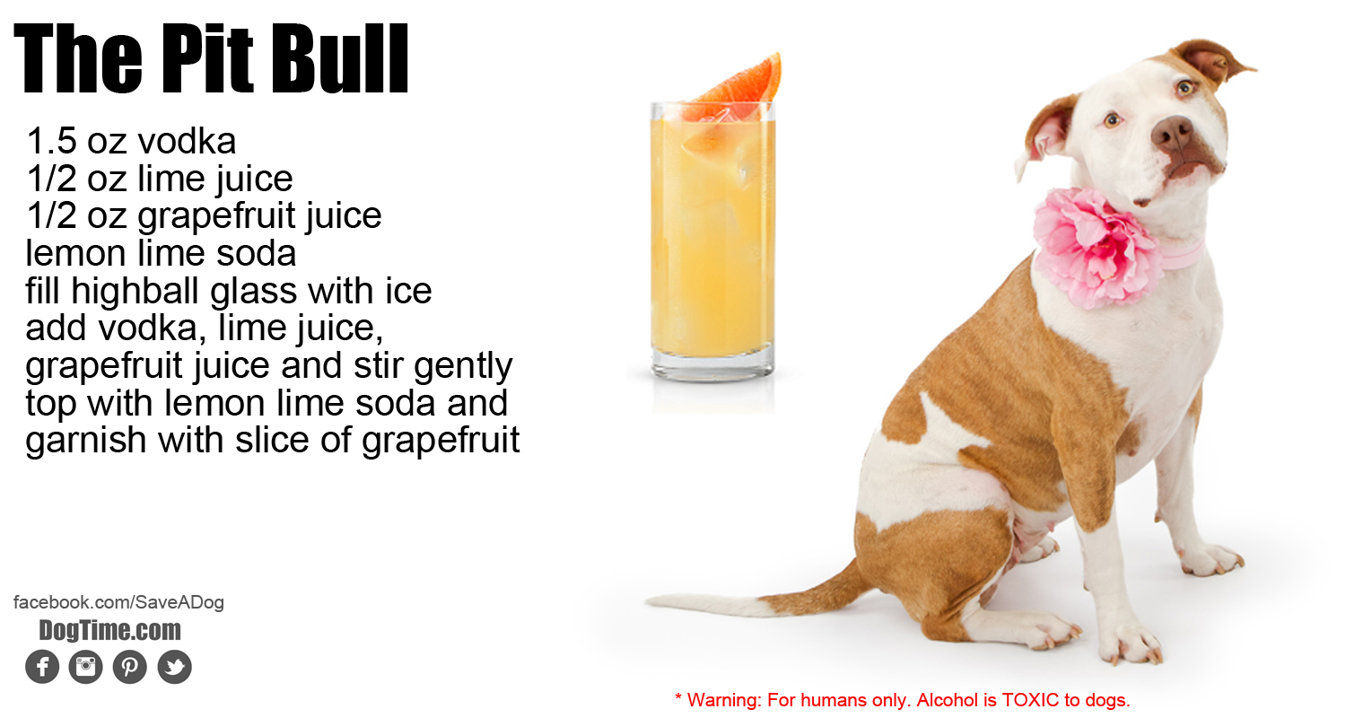 10 Dog Inspired Cocktails For Your Holiday Party Dogtime Watermelon Wallpaper Rainbow Find Free HD for Desktop [freshlhys.tk]