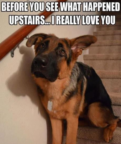Humor Inspirational Quotes: 25 Funny Dog Memes
