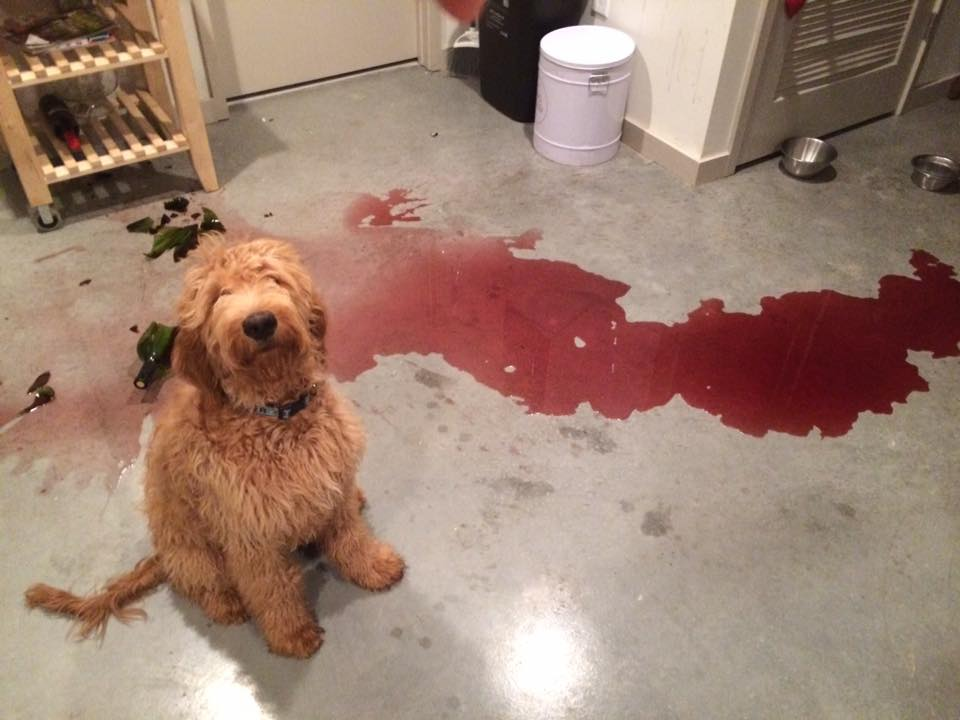 Photo Collection Guilty Dogs - 26 funny photos of guilty dogs