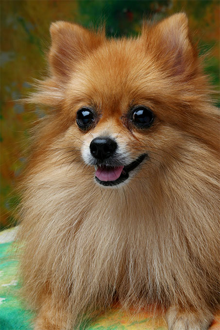 richburg dogs breed characteristics