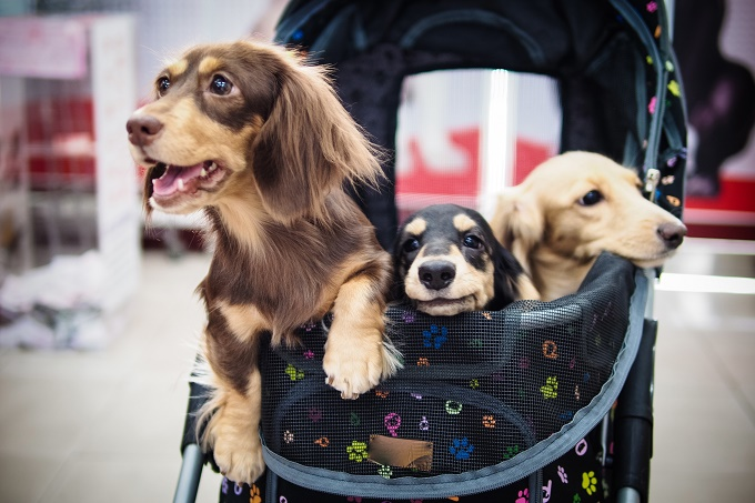Take us to the mall, mom!