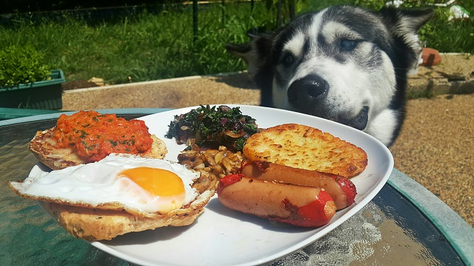 Breakfast of champions and spoiled dogs!