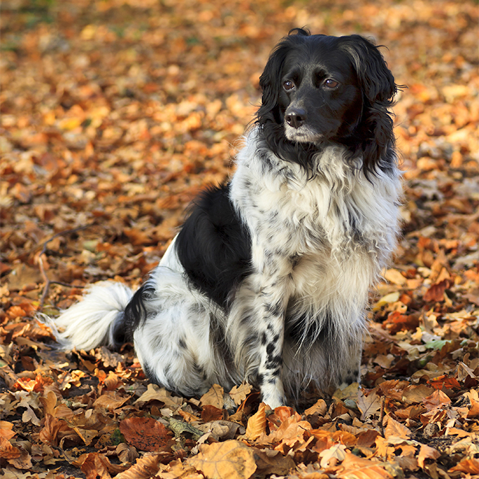 all dog breeds with pictures and information pdf