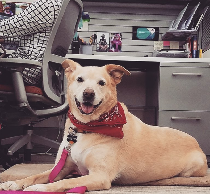 Take your dog to work day!
